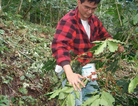 A Tale Of Two Coffee Farmers: How They Survive The Pandemic In Honduras