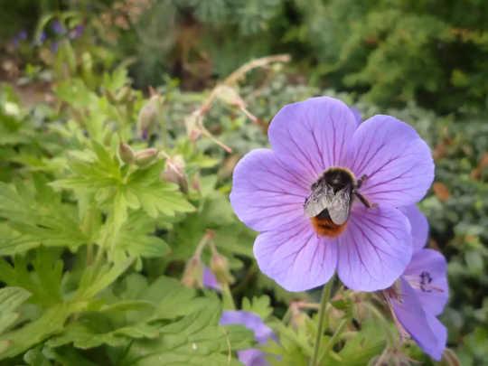 Como as cidades podem oferecer oásis urbanos para abelhas e borboletas