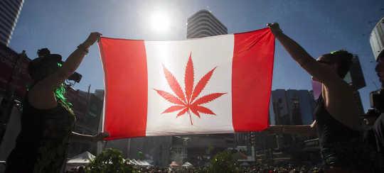 캐나다의 대마초 합법화가 성공한 이유