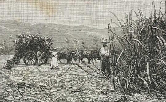كيف انسحبت امرأة من مقاطعة المستهلك الأولى - وساعدت في إلهام البريطانيين لإلغاء العبودية
