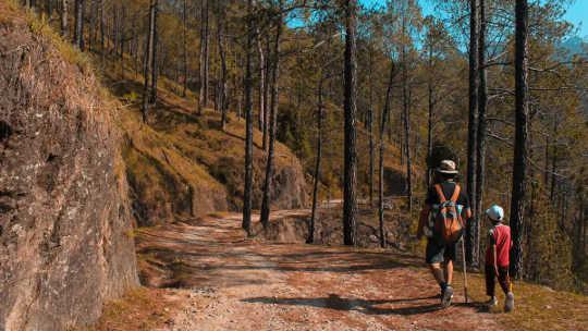 رجل وابن يمشيان عبر الغابة.