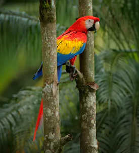 Indigene Gebiete enthalten einen Großteil der Artenvielfalt der Welt.