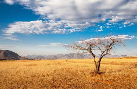 Como era o mundo na última vez em que os níveis de dióxido de carbono estavam em 400 ppm