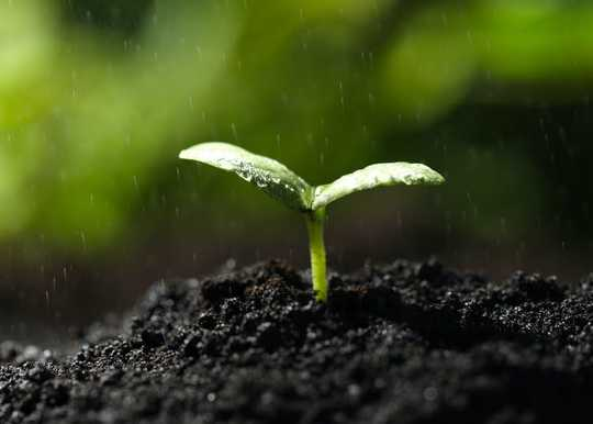Here's Why Soil Smells So Good After It Rains