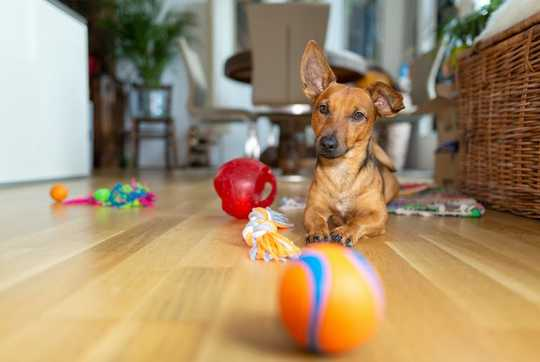 Lockdown Can Be Stressful For Pets Too – Here's How To Keep Your Dog Entertained