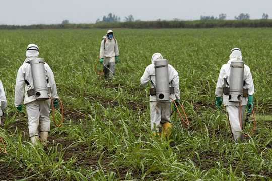 Super Popular Roundup Weed Killer Threatens Biodiversity