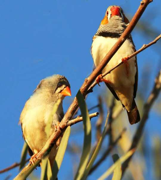 鳥類可以教我們如何選擇夥伴並使其持久