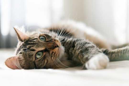온라인 고양이 동영상 시청은 스트레스를 줄이고 행복하게 만듭니다.