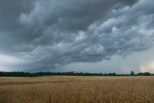 Bagaimana Pengeluar Pertanian Kanada Dapat Memimpin Jalan Dalam Tindakan Iklim