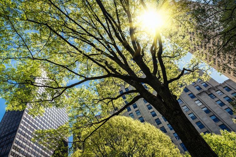 未来的城市森林:如何将我们的城市变成树梢