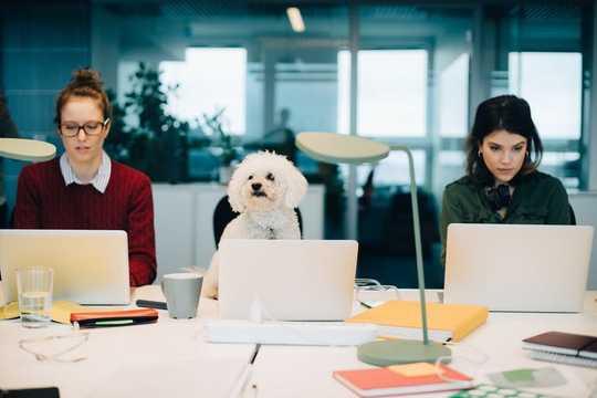 為什麼很好的狗不一定能成為很好的同事
