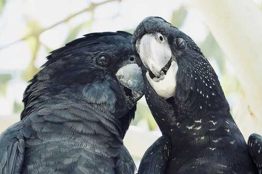 What Birds Can Teach Us About Choosing A Partner And Making It Last