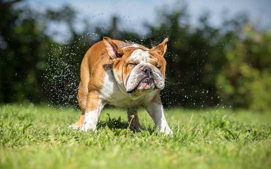 Hoe u hond kan verhinder om hitte te slaan