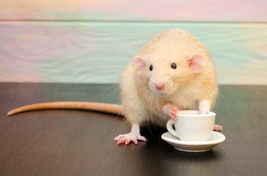 Kahvenin Biyolojisi