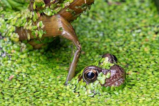 Comment découvrir les merveilles de la faune de votre propre jardin