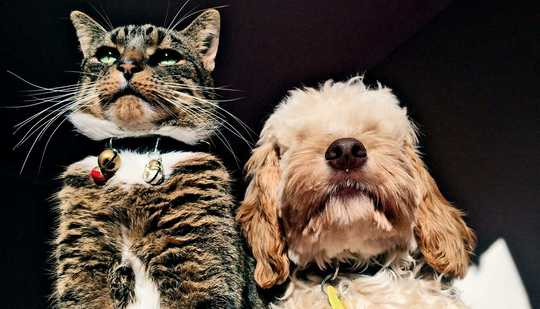 ماذا نعرف عن COVID-19 والحيوانات الأليفة؟