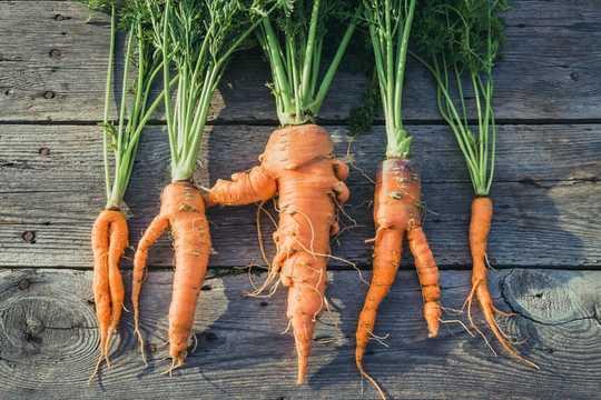 Je eigen voedsel verbouwen? Plan voor ongedierte!