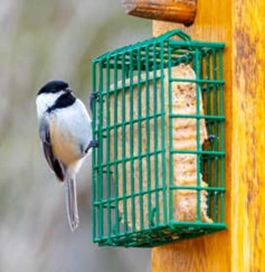 野鳥に正しい方法で餌をやるヒント
