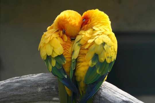 أصل وتطور الحب