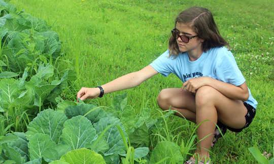 برخی از مشاوره های باغبانی از تولید کنندگان مواد غذایی بومی