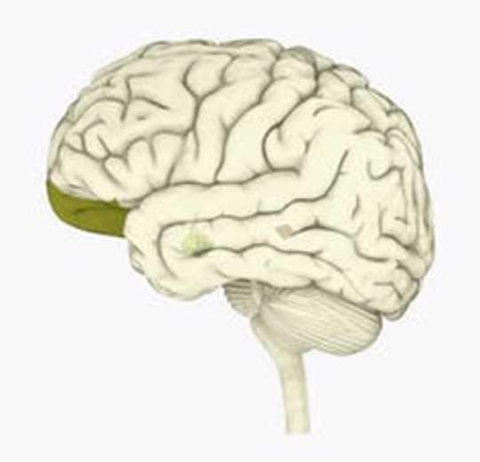 Waarom u brein ontwikkel het om voorrade te voorsien en ander te skaam