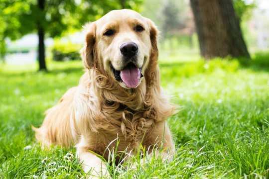 熱中症のリスクが高い9犬種–そしてそれを防ぐためにできること