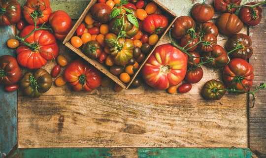 Modern Tomatoes Are Very Different From Their Wild Ancestors