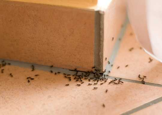 If Tiny Ants Have Invaded Your House, What To Do About It