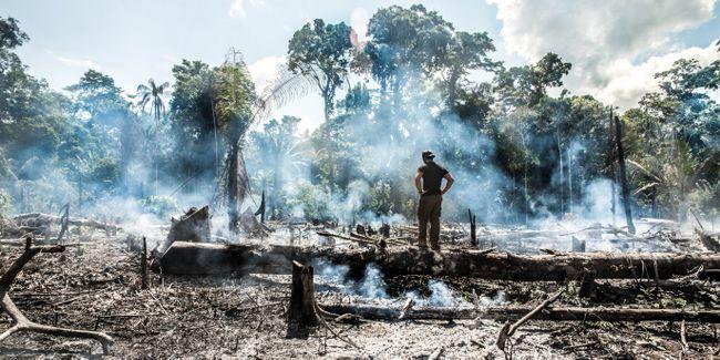 Apakah Amazon Membakar Kejahatan Terhadap Kemanusiaan?