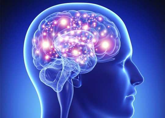 Hjernen din, sunne fettstoffer, og viktigheten av å passe inn i genene dine