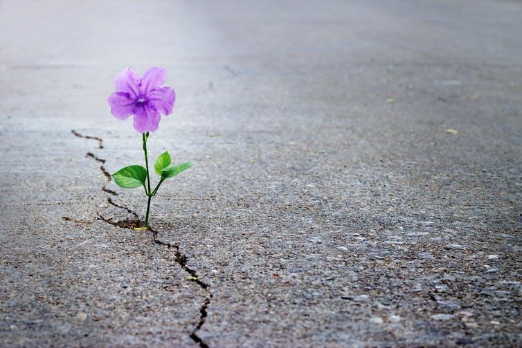 چگونه امید می تواند شما را سالم تر و خوشحال تر نگه دارد
