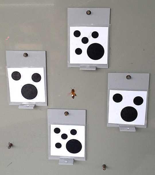 Bees Matuto nang Mas Maigi Kapag Maaari Sila Galugarin. Ang Tao ay Maaaring Magtrabaho Ang Parehong Paraan