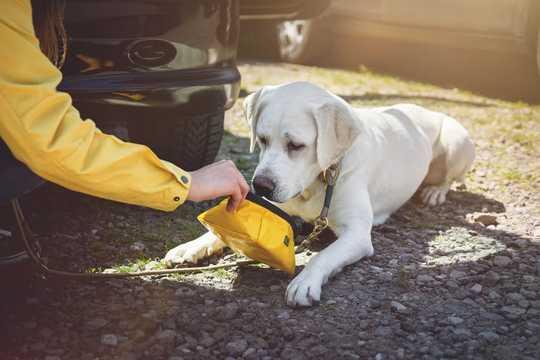 Hur du stoppar din hund med att få värmeström