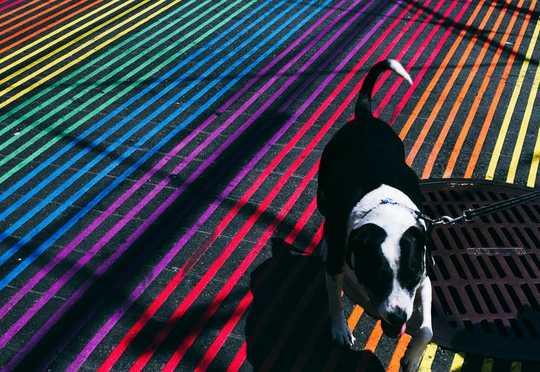 Sien honde regtig swart en wit?