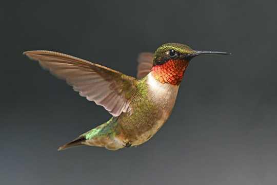 Hvordan vingene til ugler og kolibrier inspirerer droner, vindturbiner og annen teknologi