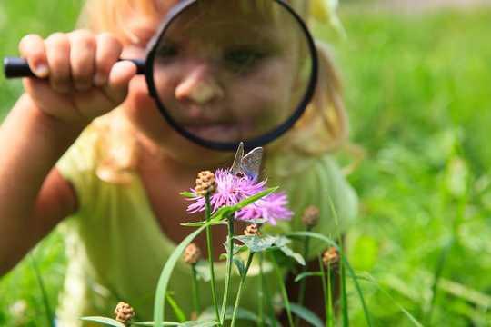 Kendi Bahçenizin Yaban Hayatı Harikalarını Keşfetme