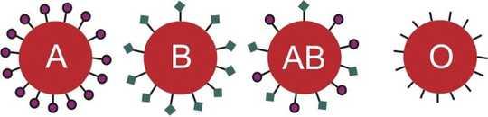 Seu tipo sanguíneo pode influenciar sua vulnerabilidade ao norovírus