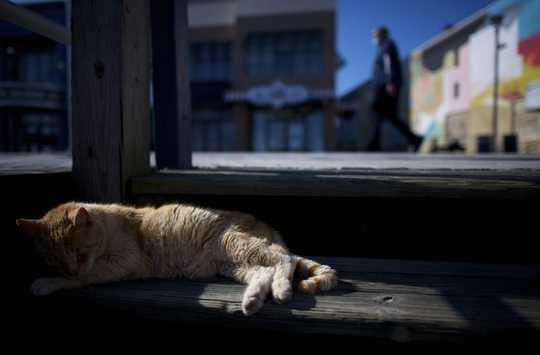 Ist es in Ordnung, streunende Katzen während der Coronavirus-Krise zu füttern?