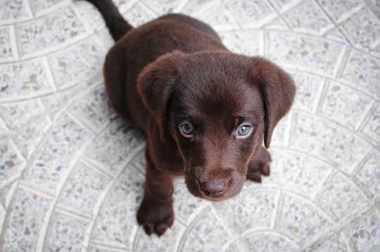 Как помочь собакам и кошкам справиться с беспокойством о разлуке, когда вы вернетесь на работу