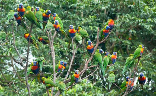 Наблюдение за птицами - огромная помощь в восстановлении после лесных пожаров