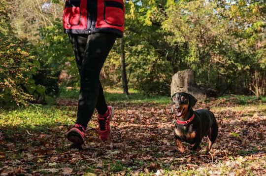 您的狗也可以成為好運動夥伴。 (五個技巧可以幫助您繼續鍛煉新的一年)
