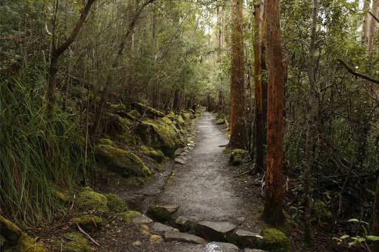 Le temps passé dans les espaces verts naturels est plus réparateur qu'en milieu urbain.