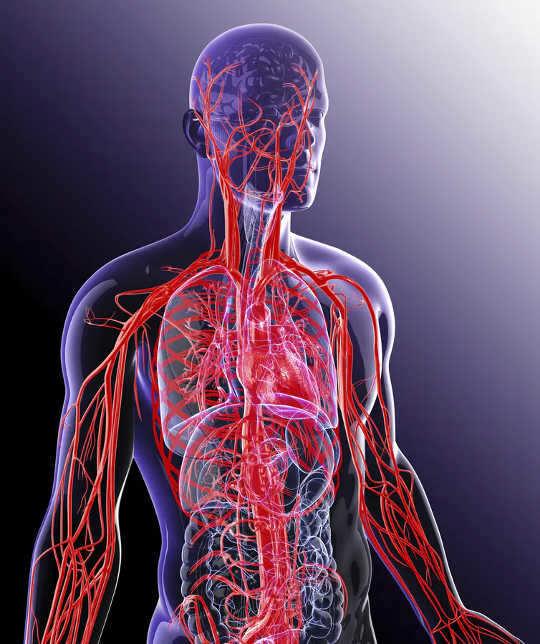 Votre corps dirige l'oxygène là où il en a le plus besoin en envoyant du sang vers les tissus les plus actifs.