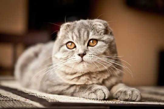 Katte met ronde gesigte en groot oë kan miskien oulik wees, maar jy kan nie sien hoe hulle voel nie