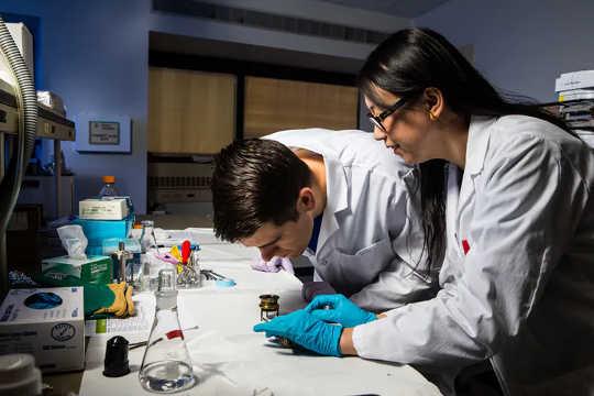 Forskare utforskar mysterierna med vitamin K vid Tufts Universitys USDA Human Nutrition Research Center on Aging.