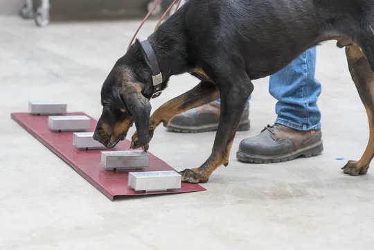 病気の香り:犬、マウス、フェレットを使って病気を検出することについて答えられた5つの質問