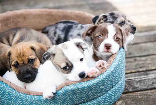 نحوه جلوگیری از کلاهبرداری هنگام خرید آنلاین حیوان خانگی خانگی