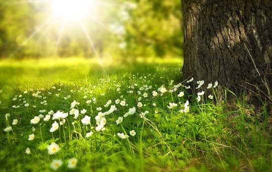 連接大自然並發現會說話的植物