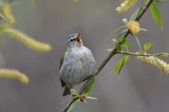 As cidades podem ajudar os pássaros em migração plantando mais árvores e apagando as luzes à noite