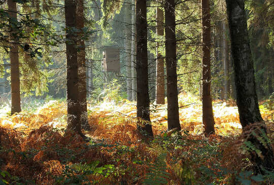 bos met varens en licht dat op de achtergrond schijnt